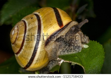 garden snail which mollusc gastropod insect stock photo edit now