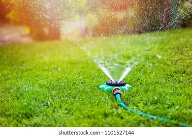 garden sprinkler watering grass at home backyard