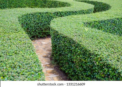 Garden stone path with green maze of plants