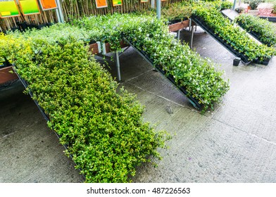 Garden store greenhouse, tree saplings and other plants for sale