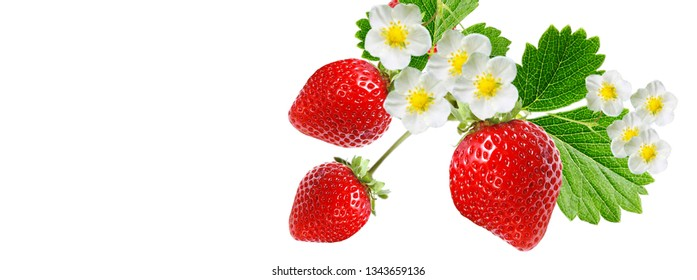 garden strawberry on white background