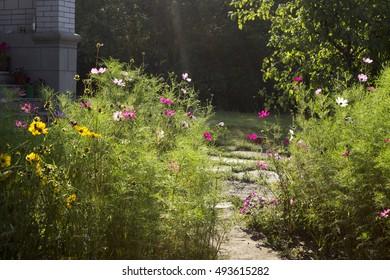 Garden summer, lit by the morning sun.