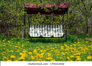 Garden swing standing on the backyard overgrowing with blossoming dandelions in sunny spring morning