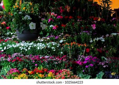 Garden in tepotzotlan