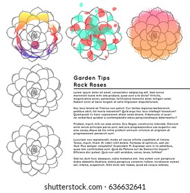Garden tips for rock roses. Illustration of rock roses for gardener.