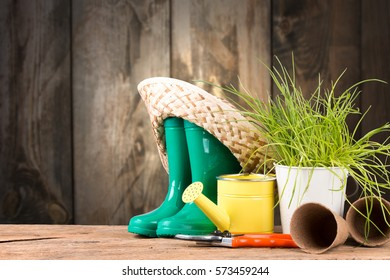 Garden tolls and spring seedling on wooden background. Rubber, can,  narcissus and tulips.