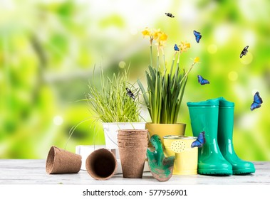 Garden tolls and spring seedling on wood and nature green background. Spring concept.