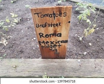 garden with tomatoes, beefsteak, roma, and Mexican midget and sign