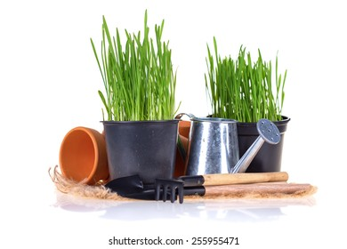 Garden tools and grass in pots isolated on white  background. Gardening concept.