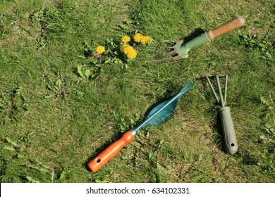 Garden tools for manual weed removal on lawn. Roots removers, pitchfork and ripper on grass next to dandelion.