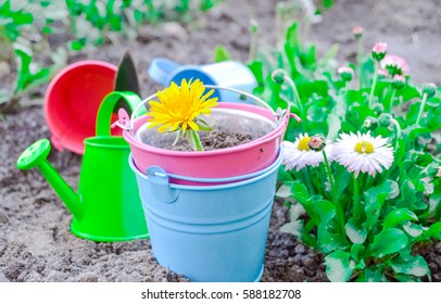 garden tools, planting flowers