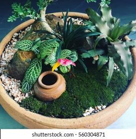Garden Tray