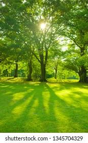 garden tree in the morning