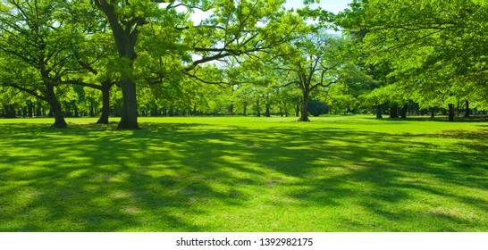 garden trees in the morning