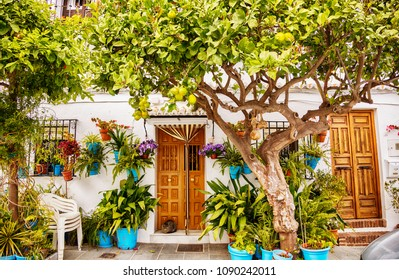 garden trees on cozy street in village Mijas