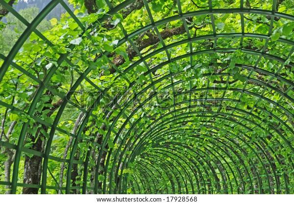 Garden Trellis Stock Photo Edit Now 17928568