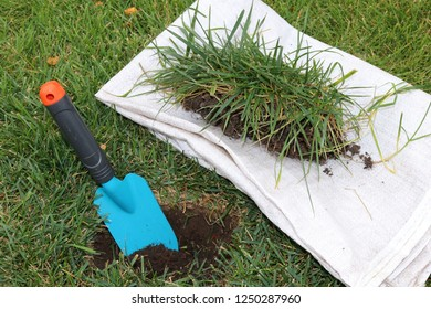 Garden trowel in the planting hole and a peace of the lawn prepared for the lawn restoration in the autumn garden