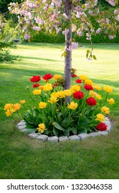Garden with tulips in different colors