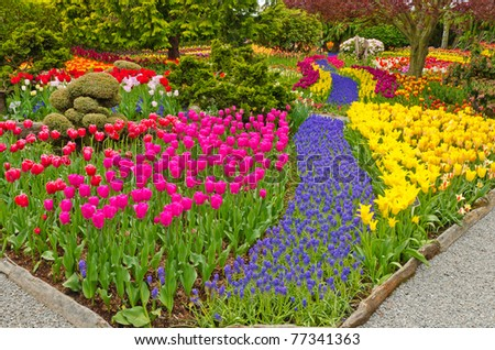Garden Tulips Skagit Washington State America Stock Photo (Edit Now ...