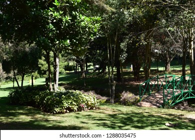 Garden with umbrella and seating and bridge
