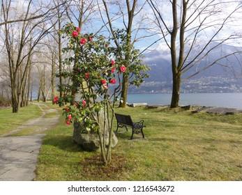 Garden view at shore of lake Lago Maggiore. Near Locarno and Ascona in Tessin Ticino. CH Switzerland