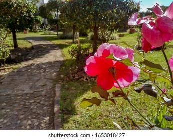Jardín en Villa de Leyva