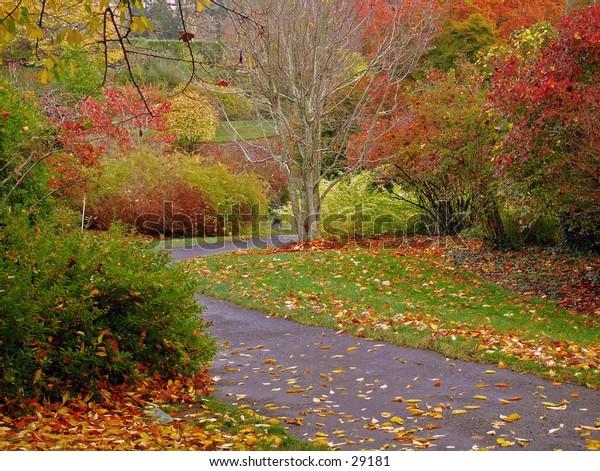 Garden walkway in Autumn.