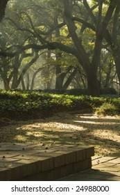 garden walkway with sunbeams