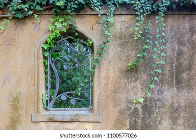garden wall with window feature and vines of ivy