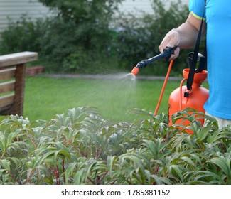 A garden water sprayer. Spray bottle. The orange sprayer is on a green lawn. Men's hand holds garden sprayer. A man sprays plants with water. Processing the garden area