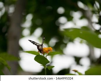 A garden where butterflies dance