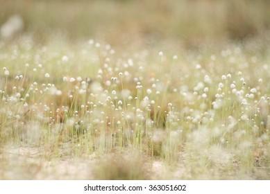 Garden of White Flowers