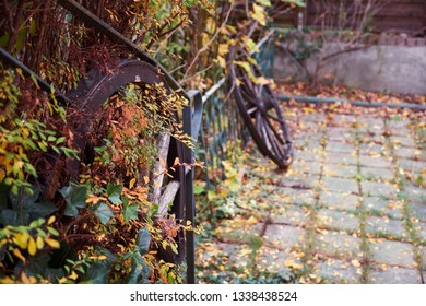 Garden with wooden wheels, colorful colors, autumn and rowan berries.