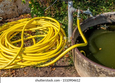 In a garden, a yellow garden hose connected to a faucet. An old scrap container is filled with dirty, dirty water.