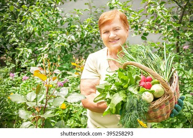 Gardener active senior elderly woman is holding basket of  freshly picked vegetable. Caucasian happy lady in her 60s has healthy lifestyle. Mature active  female model involved in horticulture.