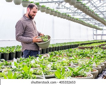 gardener care about plants in the greenhouse