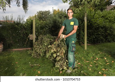 gardener cleaning the garden after cutting some branches of a cherrie tree