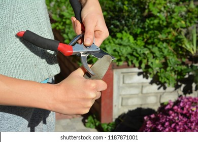 Gardener cleaning and sharpening garden tool in autumn.