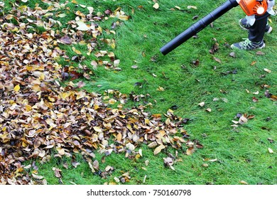 Gardener clearing up the leaves using a leaf blower tool