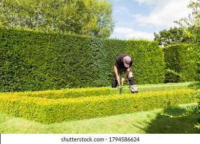 Gardener clipping box hedge in Tudor Knot garden.