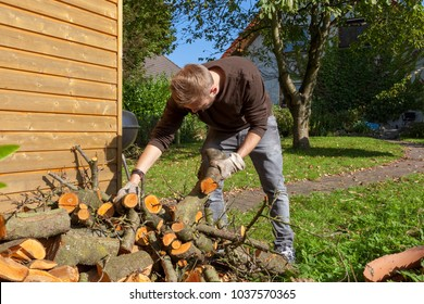 gardener collecting bracnches after pruning a tree