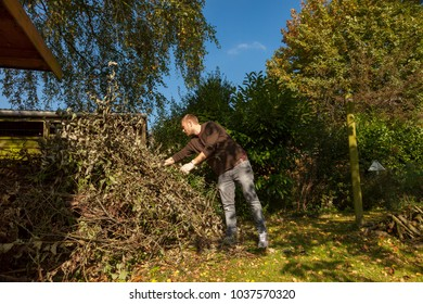 gardener collecting branches after pruning back a tree