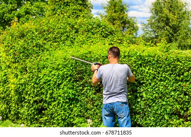 gardener cuts a Bush with electric hedge trimmers