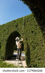 The gardener cuts the growing stems on the bushes