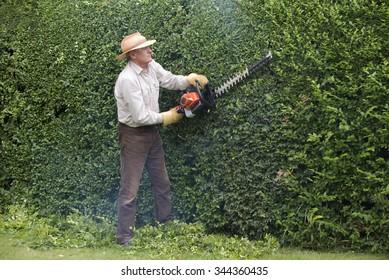 Gardener cutting a garden hedge with a petrol hedgecutter