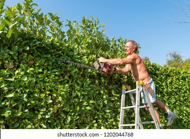 Gardener cutting a hedge with electric hedge trimmer in the garden.