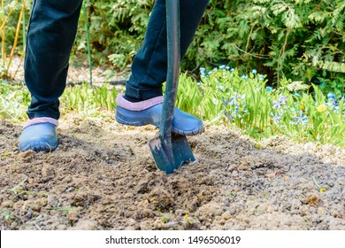 Gardener digging the earth over with a garden spade to cultivate the soil ready for planting in early spring - low section of rubber boot standing with gardening shovel
