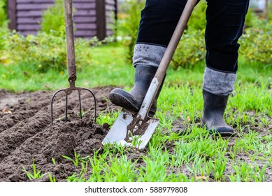 Gardener digging in the garden. Soil preparing for planting in spring. Gardening.