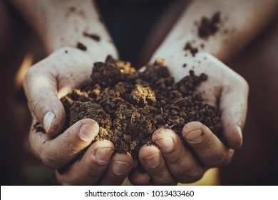 Gardener with dirt for planting. Spring garden. Plant seedling in farmers hands.