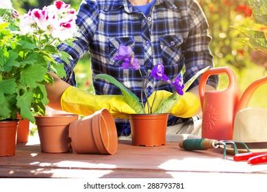 Gardener. Flowers in pots.